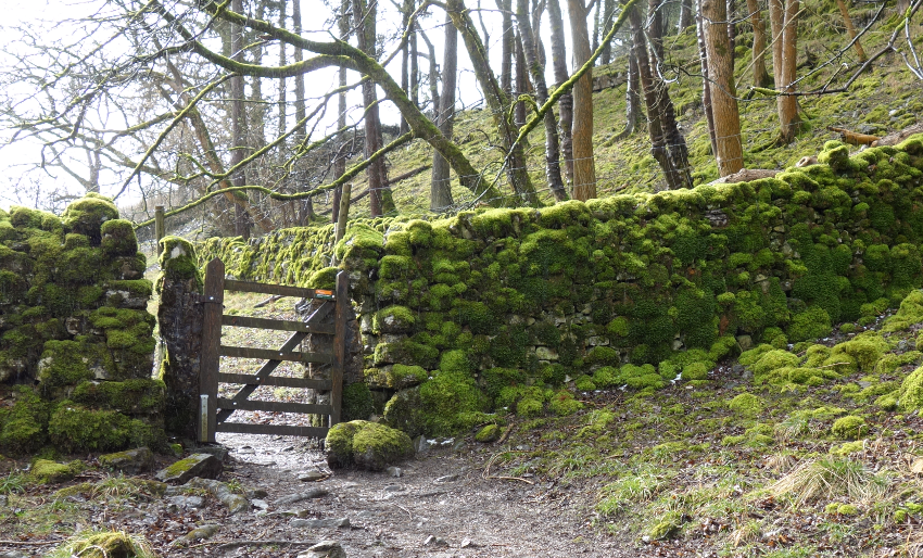 Three Dales Way: Mossy Walls