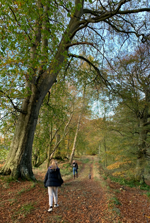 Family walks at Allen Banks