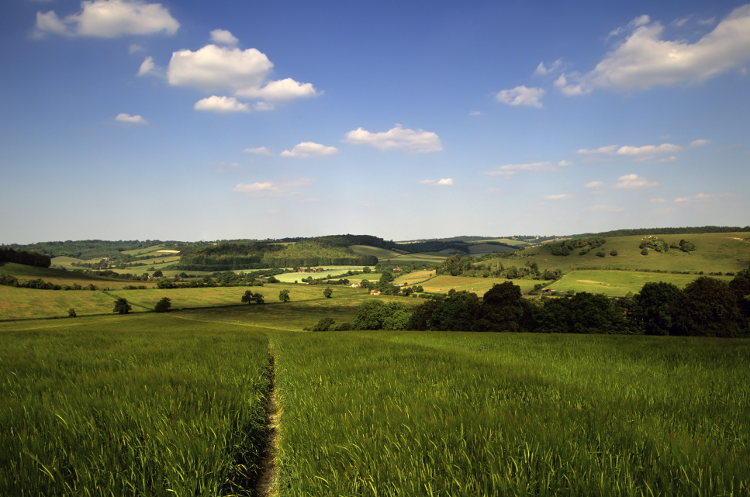 The Ridgeway: Views over the Chilterns