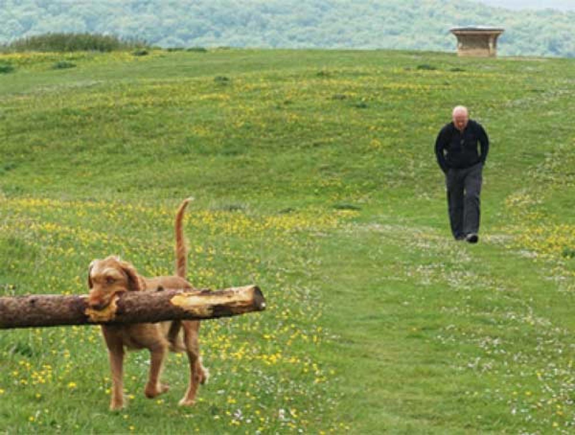 A dog carries a stick on a dog-friendly walking holiday