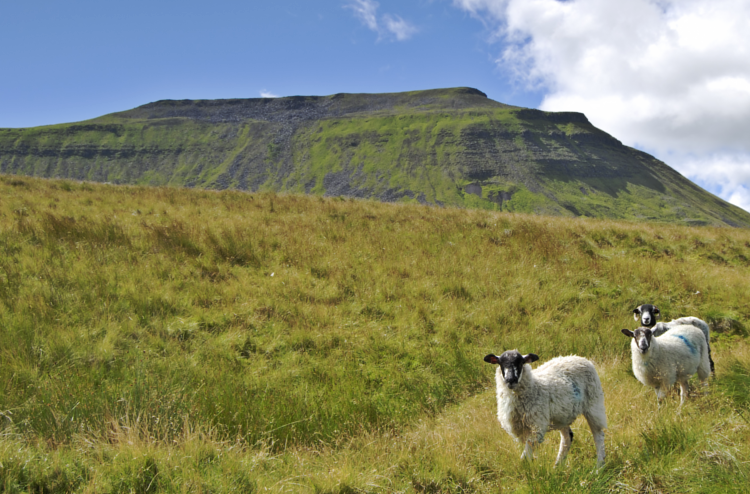 Ingleborough on the Yorkshire Three Peaks