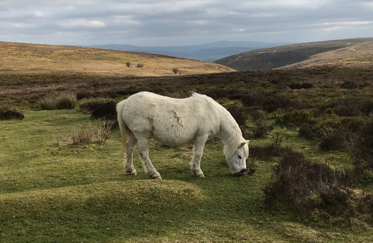 Shropshire Hills Walking Holiday: Long Mynd