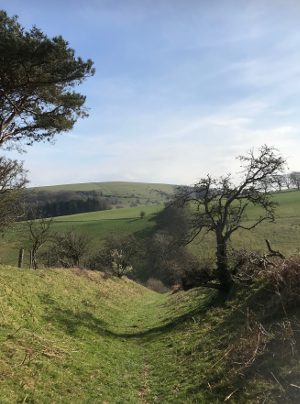 Shropshire Hills Walking Holiday: Offas Dyke Path