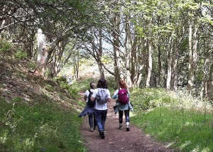 Cleveland Way 50th Anniversary: Contours walk through woodland