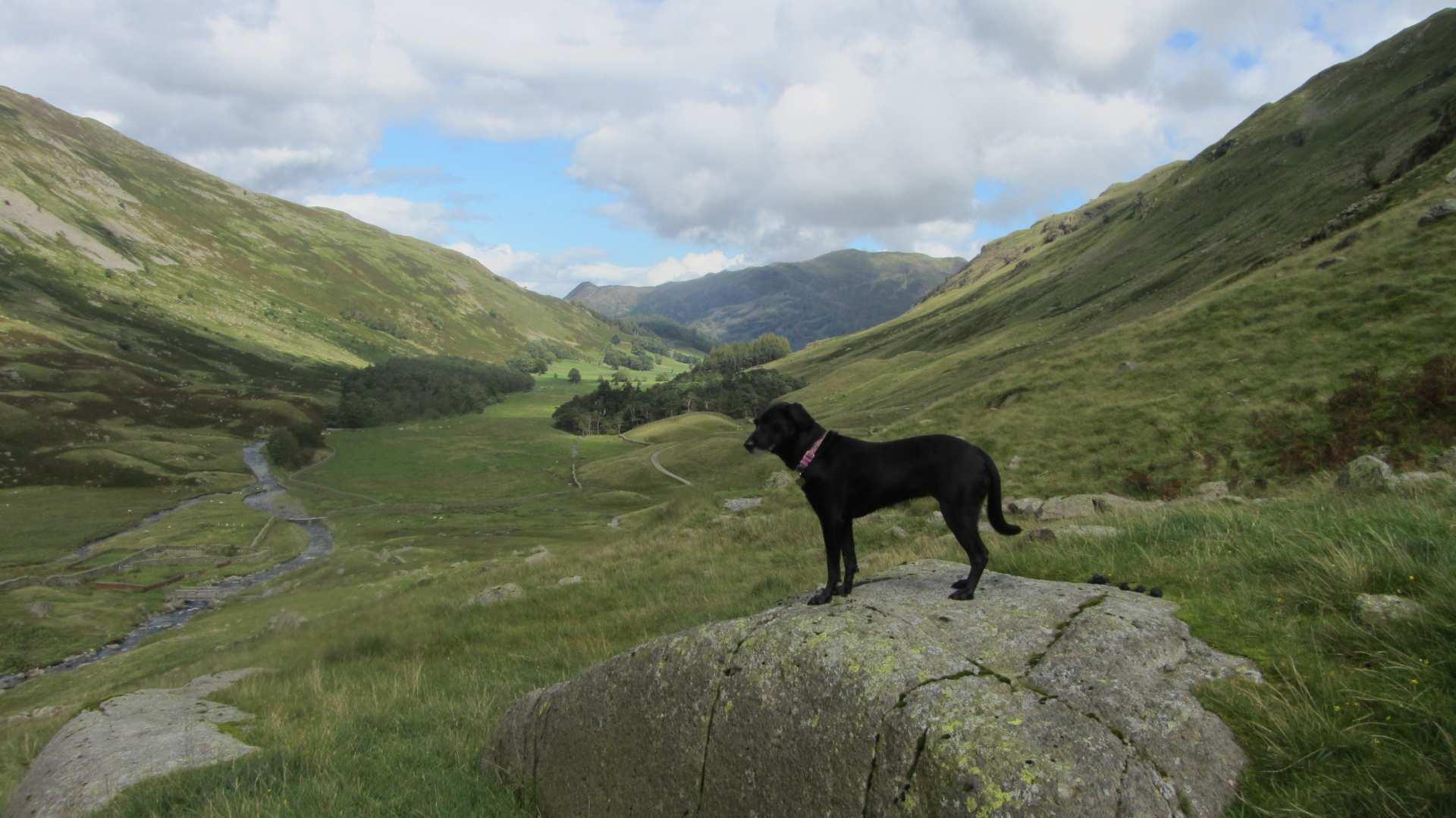 Dog Friendly Walks Rosthwaite