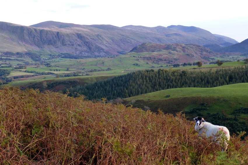 Easy Dog Walks Lake District